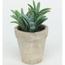 Sonoran Highlands Potted Succulent Desk Top Plant in Pot