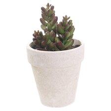 Sonoran Highlands Potted Mini Jade Succulent Desk Top Plant in Pot (Set of 6)