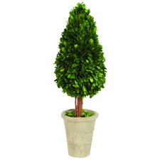 Water Drop Shaped Boxwood Topiary in Planter