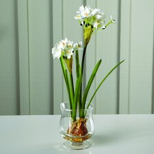 Fleur Paperwhites with Bulbs in Glass