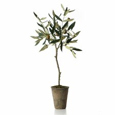 French Market Olive Tree in Pot (Set of 4)