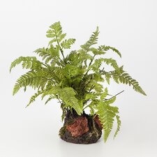 Leather Fern Drop Desk Top Plant in Terrarium