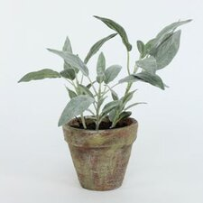 Potted Sage Desk Top Plant in Pot