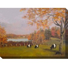 Fall Galloways Outdoor Canvas Art
