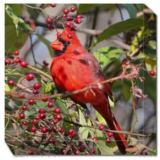 Cardinal in Berries Outdoor Canvas Art