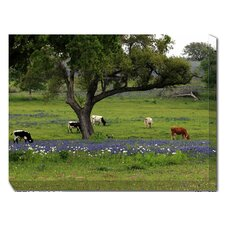 Longhorns Grazing Photographic Print on Canvas