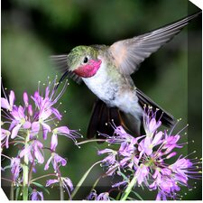 Hummingbird #1 Outdoor Canvas Art