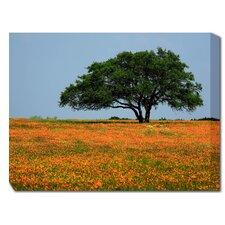 Majestic Oak Photographic Print on Canvas