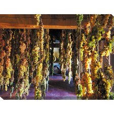 Hanging Grapes Photographic Print on Canvas