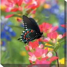 Butterfly on Paintbrush Photographic Print on Canvas