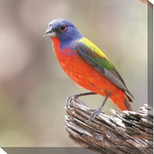 Painted Bunting Art Painting