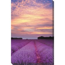 <strong>West of the Wind Outdoor Canvas Art</strong> Lavender Sunrise Art Painting