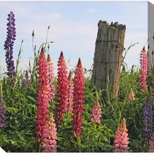 <strong>West of the Wind Outdoor Canvas Art</strong> Lupines's Post Art Painting