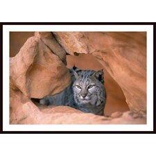 Bobcat in Sandstone Formation Wall Art by David Ponton
