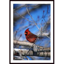Male Northern Cardinal Bird Wall Art by David Spier