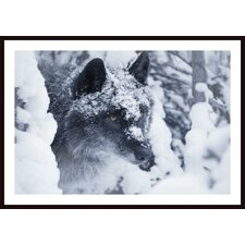 Lone Wolf in Snow Wall Art by Don Hammond