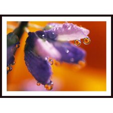 <strong>Barewalls</strong> Reflection Of Flower in Dew Drops Wall Art by Craig Tuttle