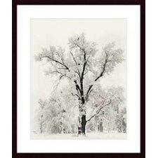 <strong>Barewalls</strong> Oak Tree by Ansel Adams Wood Framed Art Print