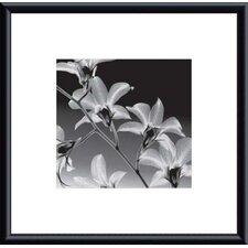 Orchid Denrobium by Steven N. Meyers Metal Framed Art Print