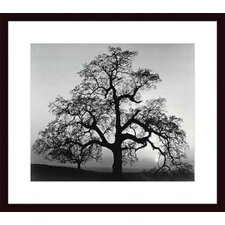<strong>Barewalls</strong> Oak Tree, Sunset City, California by Ansel Adams Wood Framed Art Print