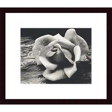 Rose and Driftwood by Ansel Adams Wood Framed Art Print