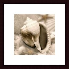 <strong>Barewalls</strong> Iridescent Seashell III by Donna Geissler  Wood Framed Art Print