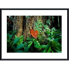 <strong>Barewalls</strong> Rain Forest Metal Framed Art Print
