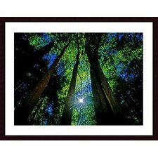 <strong>Barewalls</strong> Forest Canopy Wood Framed Art Print