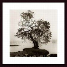 <strong>Barewalls</strong> Coast Oak Tree Wood Framed Art Print