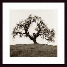 <strong>Barewalls</strong> Hillside Oak Tree Wood Framed Art Print