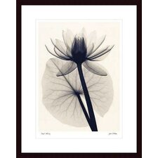 <strong>Barewalls</strong> Tropical Water Lily Wood Framed Art Print