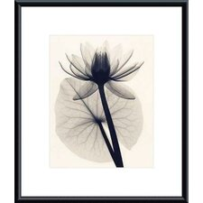 <strong>Barewalls</strong> Tropical Water Lily by Judith McMillan Metal Framed Art Print