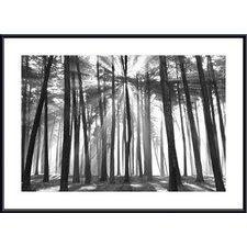 Sunburst, San Francisco Presido by Chris Honeysett Framed Photographic Print