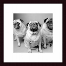 Three Pugs Wood Framed Art Print