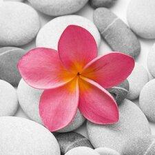 Deco Glass Beautiful Pink Flower Photographic Print