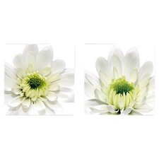 Deco Glass Daisy 2 Piece Photographic Print Set