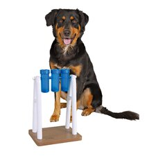 Mad Scientist Dog Activity Game