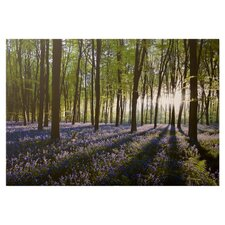 Bluebell Landscape Canvas Art