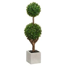 Baby's Tear Double Ball Square Topiary