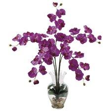 Liquid Illusion Phalaenopsis Orchid in Purple with Vase