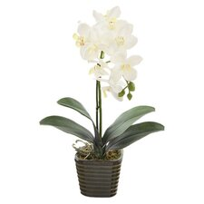 """14"""" Potted Orchid"""