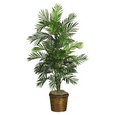 Washington Silk Areca Palm Tree