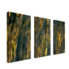 "Prairie Grass I by Kurt Shaffer, Canvas Art - 33"" x 27"" (Set of 3)"