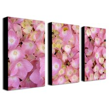 <strong>Trademark Global</strong> Pink Hydrangea by Kathie McCurdy Canvas Art (Set of 3)