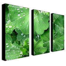 Water Droplets by Kathie McCurdy 3 Piece Photographic Print onCanvas Set