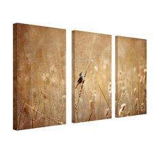 Bird by Lois Bryan Canvas Art (Set of 3)
