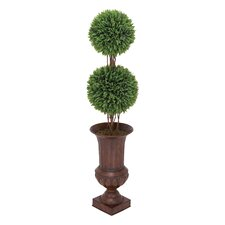 Wild Rosemary Ball Topiary in Urn