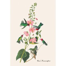 <strong>Buyenlarge</strong> Anna's Hummingbird Canvas Art