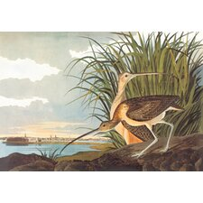 Long Billed Curlew by John James Audubon Graphic Art on Canvas