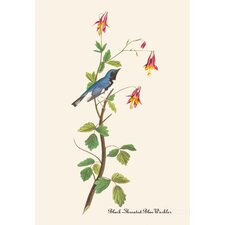 Black Throated Blue Warbler by John James Audubon Graphic Art on Canvas